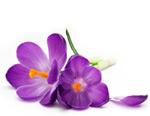 fragrance-family-florals-bottom