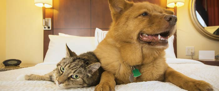 Apartment Odor - Pets
